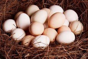 肉蛋价格齐跌 未来走势如何?